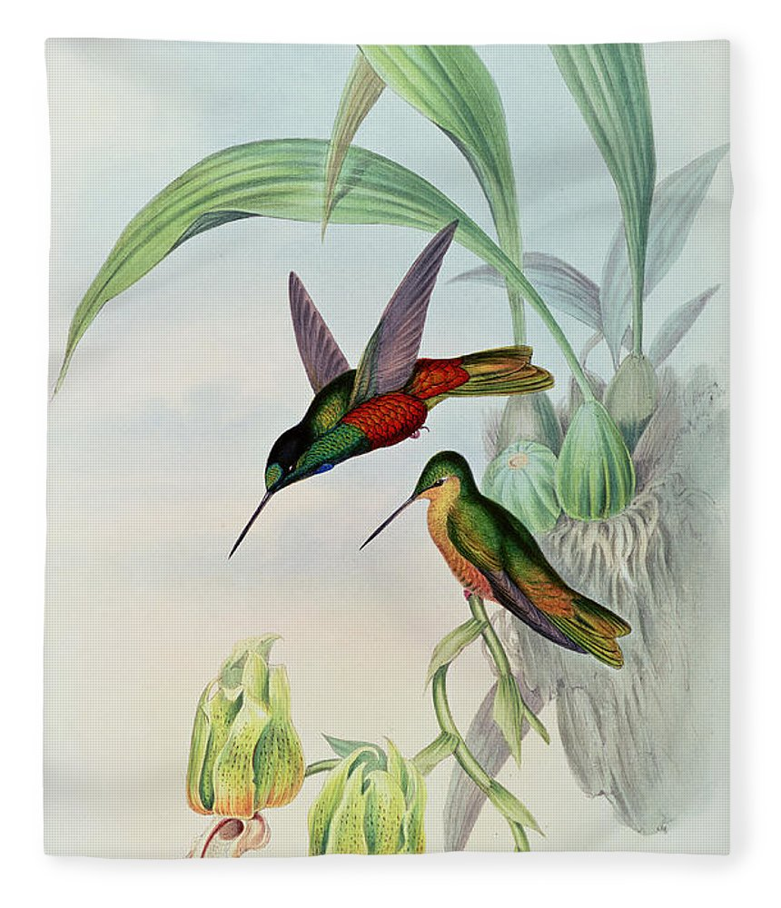Hummingbird Fleece Blanket featuring the painting Star Fronted Hummingbird by John Gould