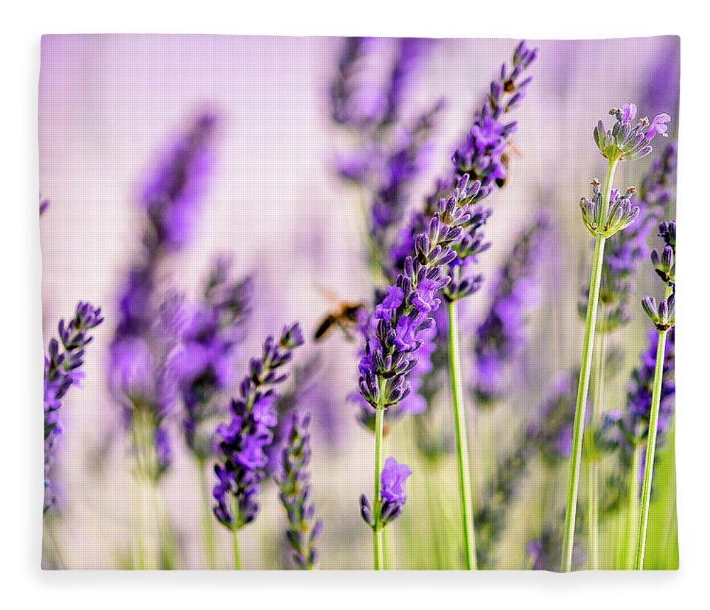 Lavender Fleece Blanket featuring the photograph Summer Lavender by Nailia Schwarz
