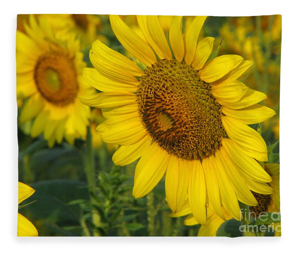 Sunflowers Fleece Blanket featuring the photograph Sunflower series by Amanda Barcon