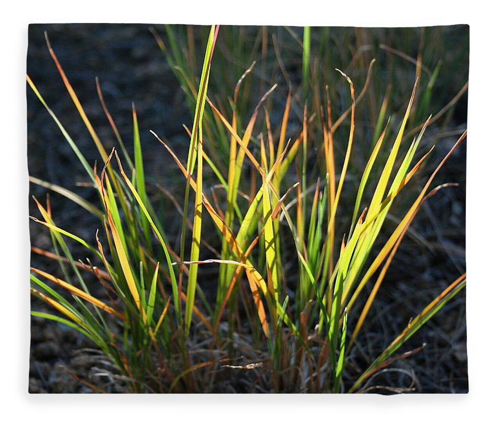 Grass Fleece Blanket featuring the photograph Sunlit Grass by Ric Bascobert