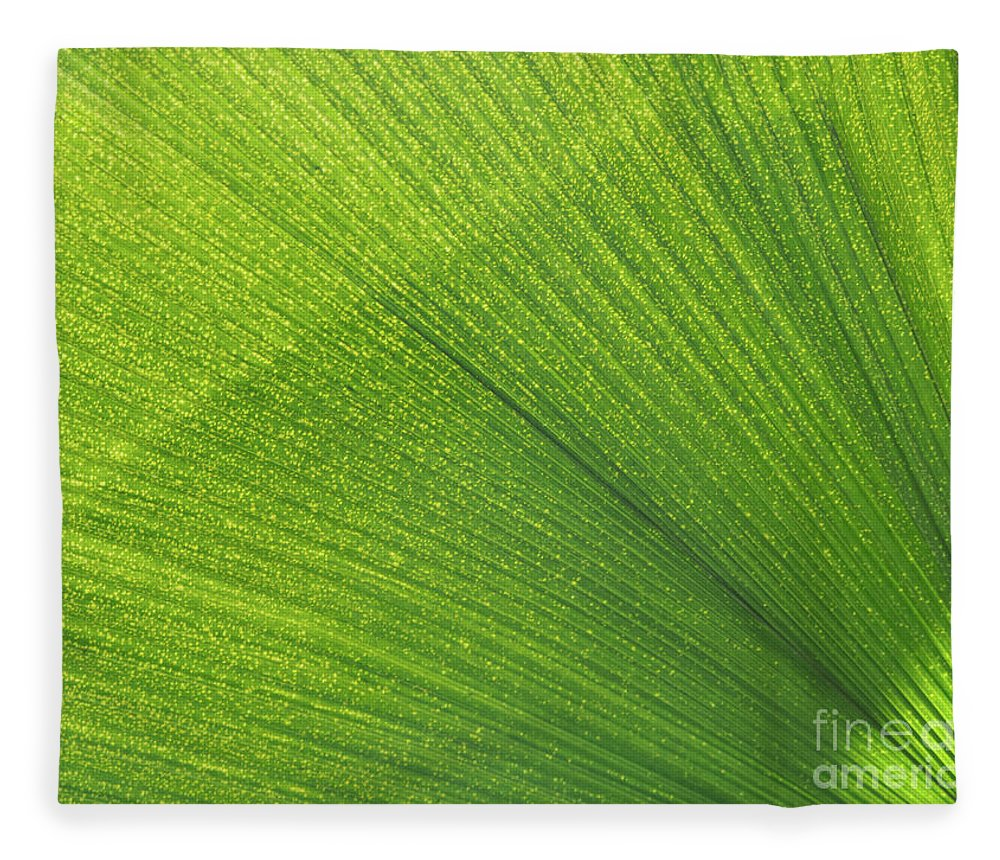 Palm Fleece Blanket featuring the photograph Sunlit Palm Leaf by Ann Horn
