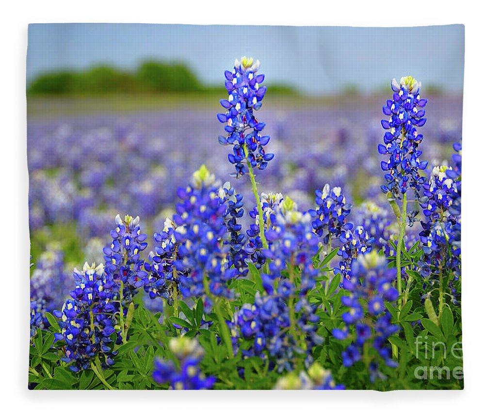 Texas Blue Texas Bluebonnet Wildflowers Landscape Flowers Fleece