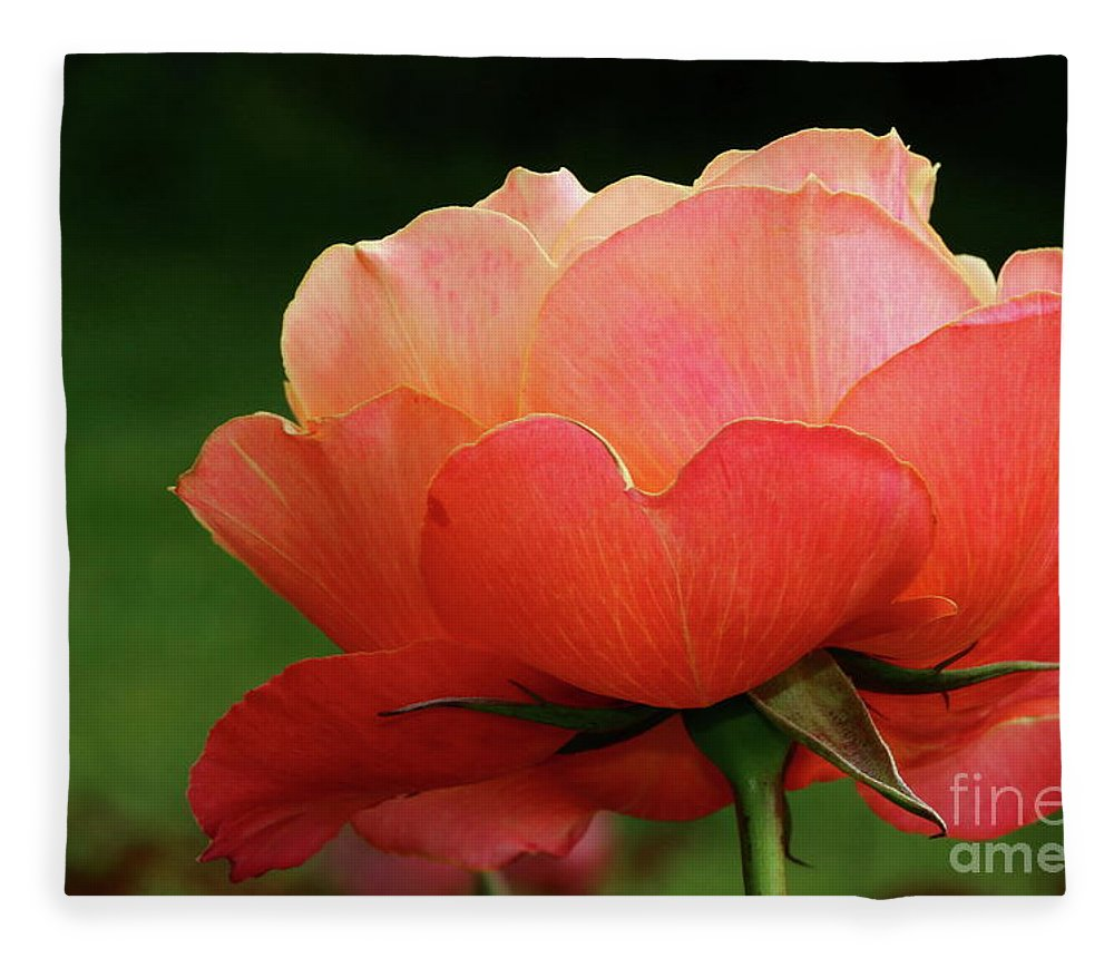 Rose Fleece Blanket featuring the photograph The Beauty Of A Rose by Christiane Schulze Art And Photography