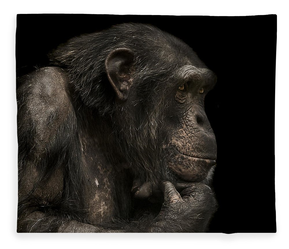 Chimpanzee Fleece Blanket featuring the photograph The Listener by Paul Neville