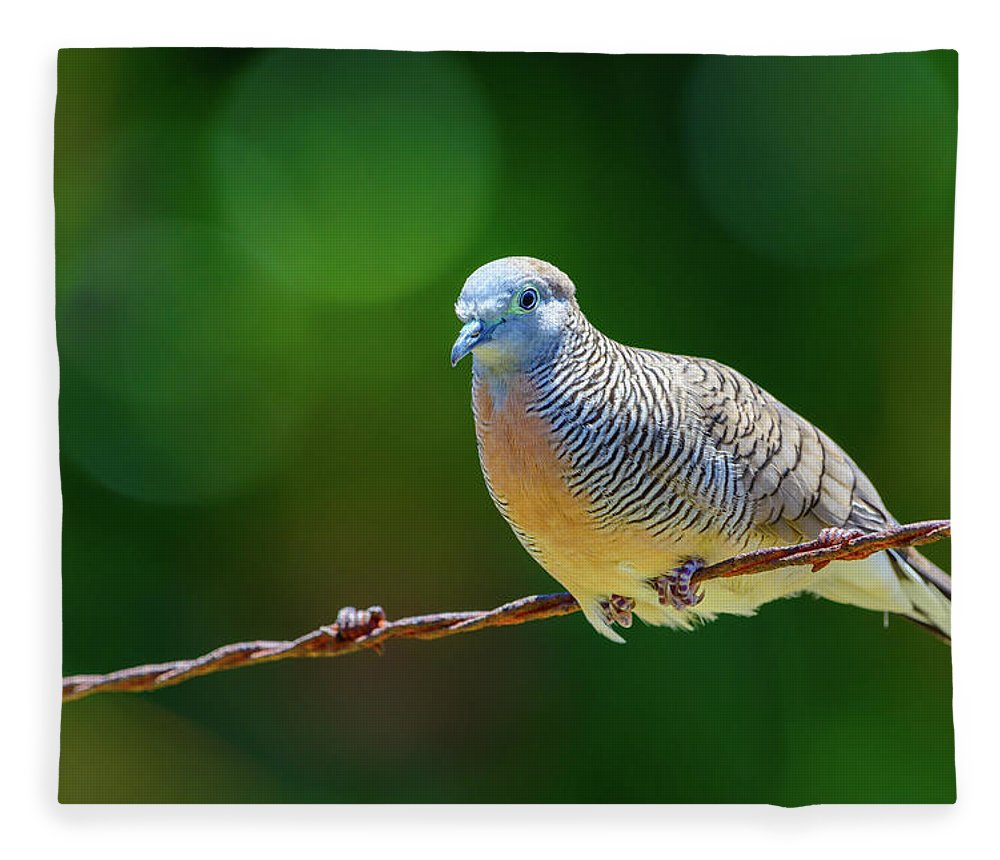Dove Fleece Blanket featuring the photograph The Peaceful Dove by Jeff Jarrett