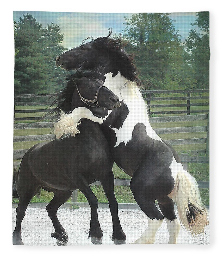 Horses Fleece Blanket featuring the photograph The Posturing Game by Fran J Scott