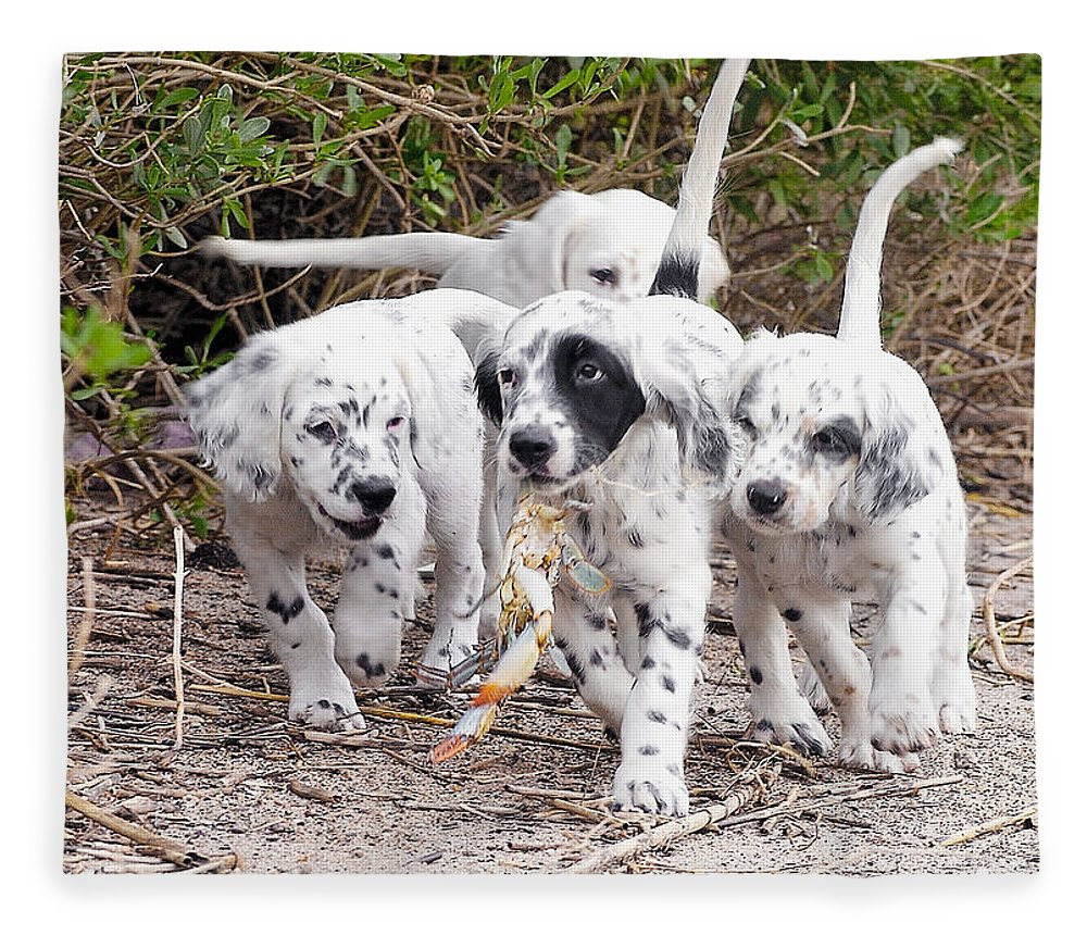 English Setter Fleece Blanket featuring the photograph The Puppy's Prize by Scott Hansen