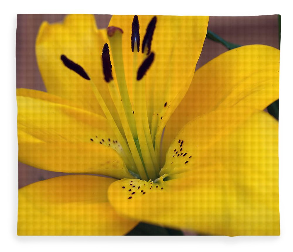 Yellow Fleece Blanket featuring the photograph The Real Thing by Teri Schuster