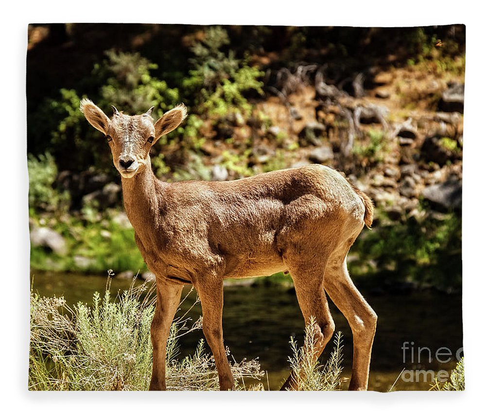 Sheep Fleece Blanket featuring the photograph The Young One by Robert Bales