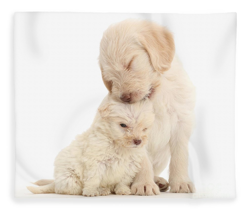 Golden Labradoodle Fleece Blanket featuring the photograph They Call It Puppy Love by Warren Photographic
