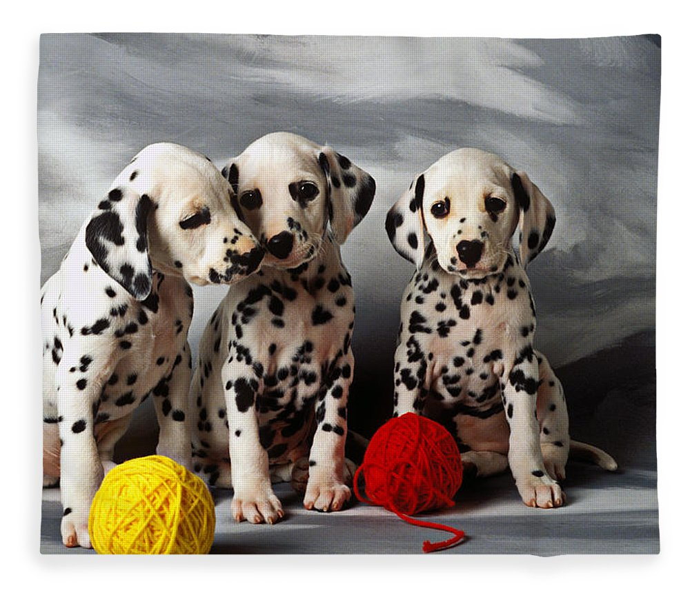 Three Dalmatian Puppies Fleece Blanket For Sale By Garry Gay
