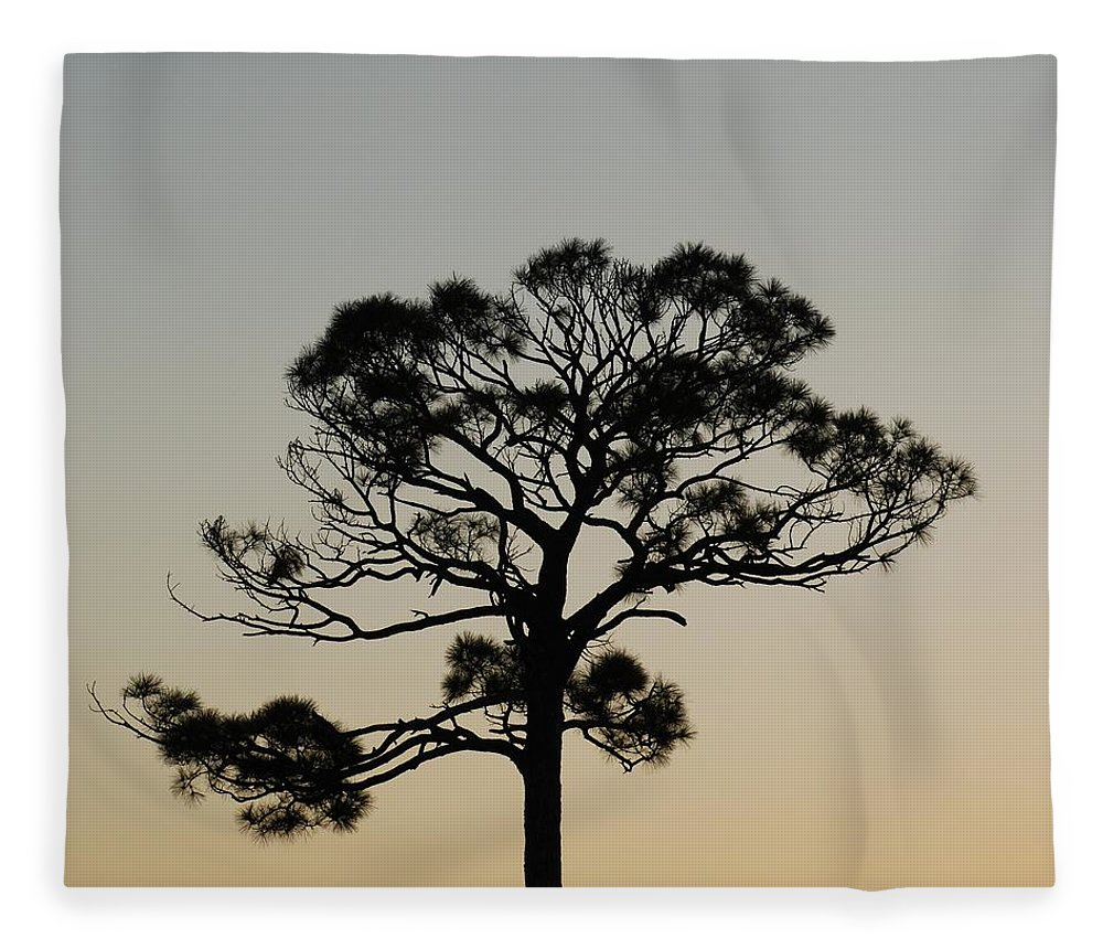 Tree Fleece Blanket featuring the photograph Trees In Sunset by Rob Hans