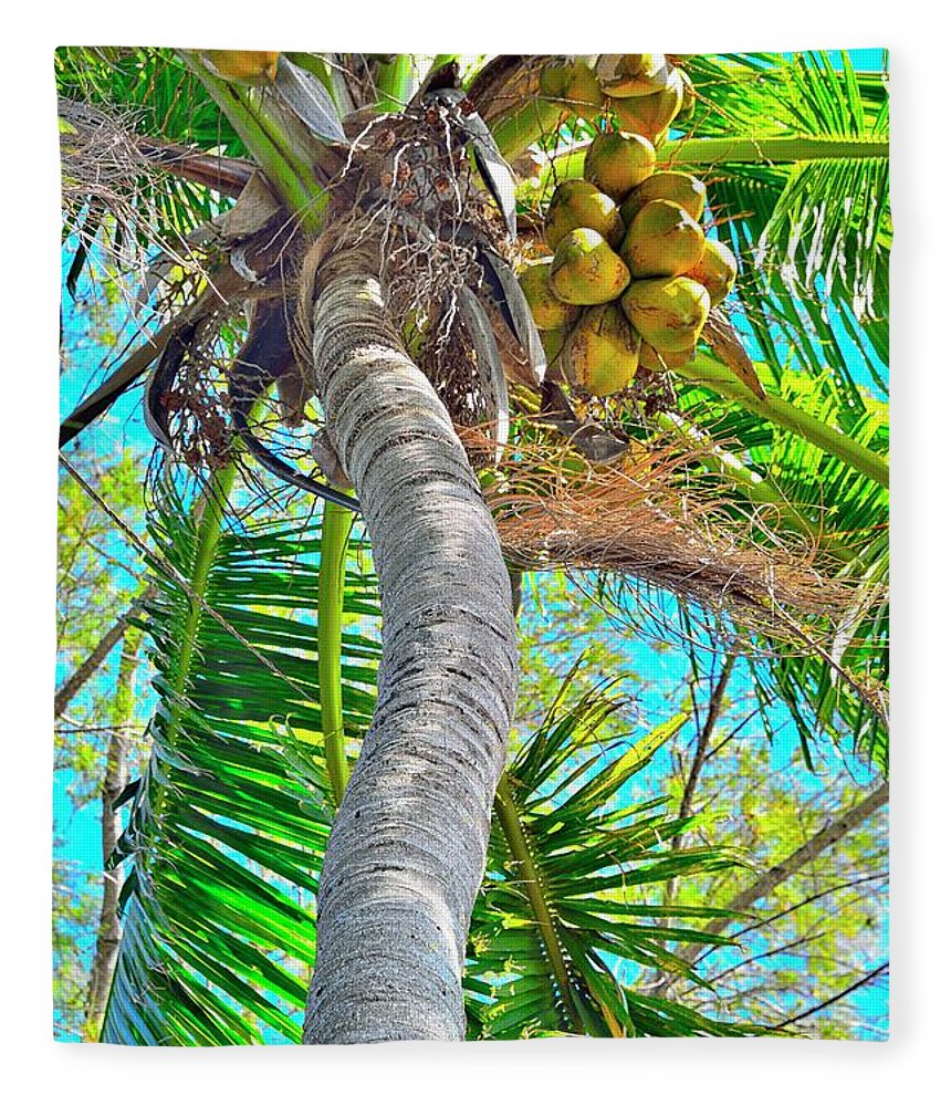 Coconut Palm Tree Fleece Blanket featuring the photograph Trunk Show by Alison Belsan Horton