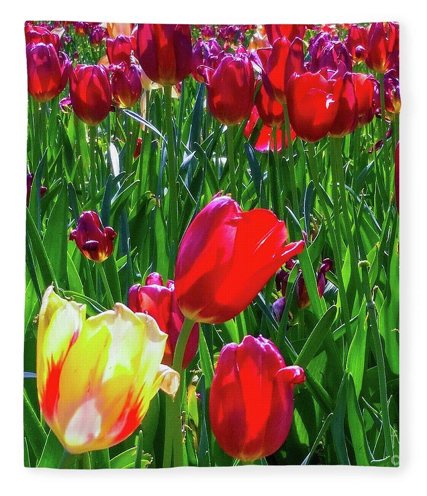 Tulips Fleece Blanket featuring the photograph Tulip Garden In Bloom by D Davila