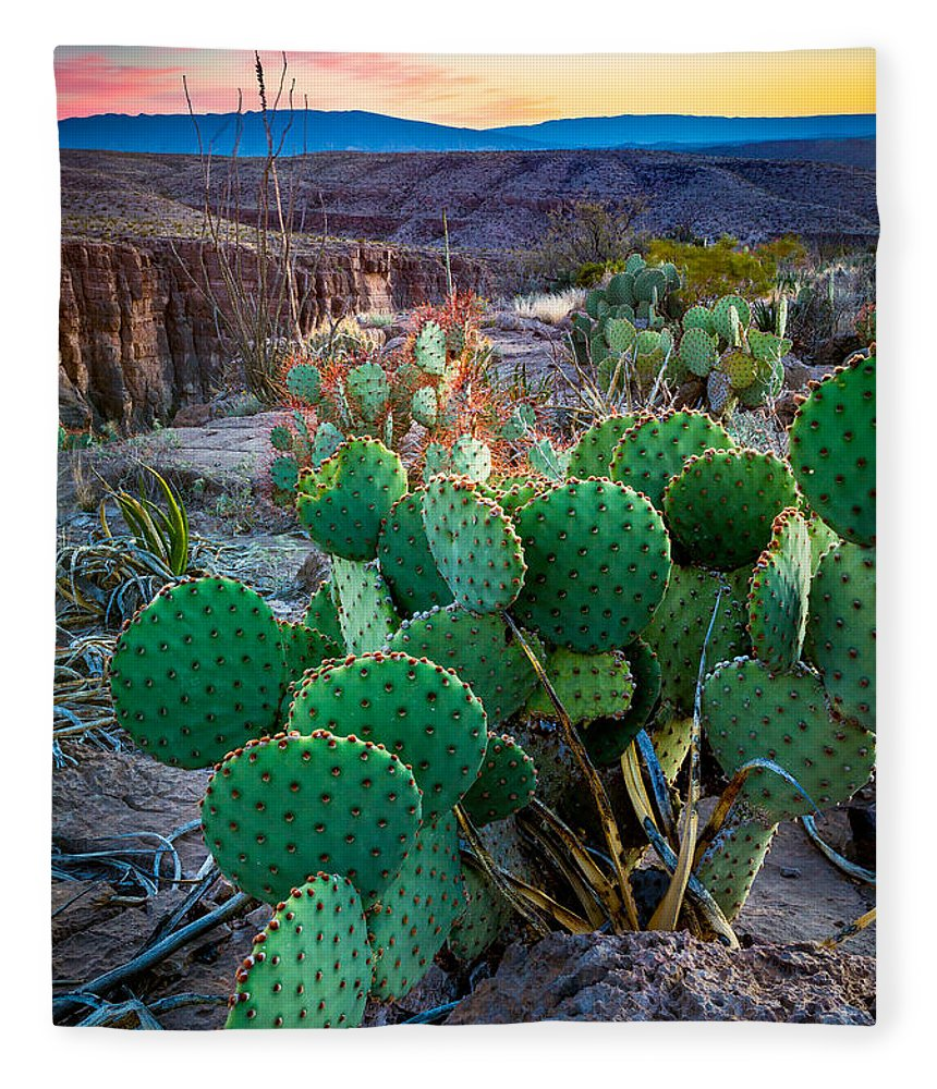 America Fleece Blanket featuring the photograph Twilight Prickly Pear by Inge Johnsson
