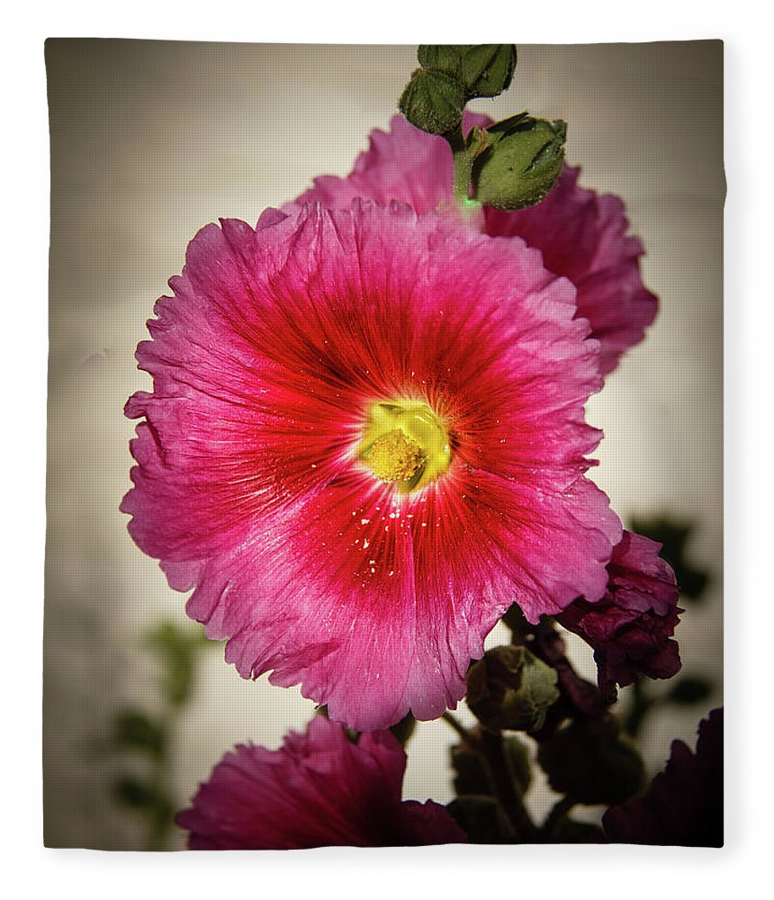 Alcea Rosea Fleece Blanket featuring the photograph Vignetted Hollyhock by Robert Bales