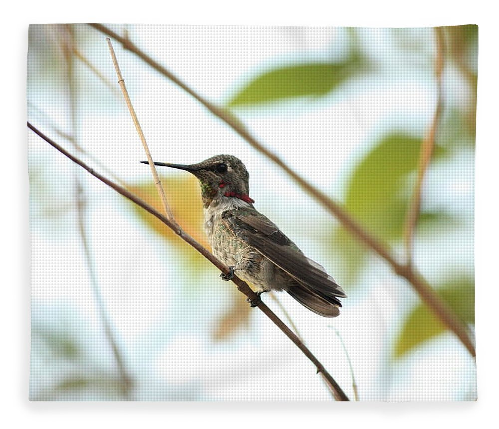 Hummingbird Fleece Blanket featuring the photograph Watchful Hummingbird by Carol Groenen