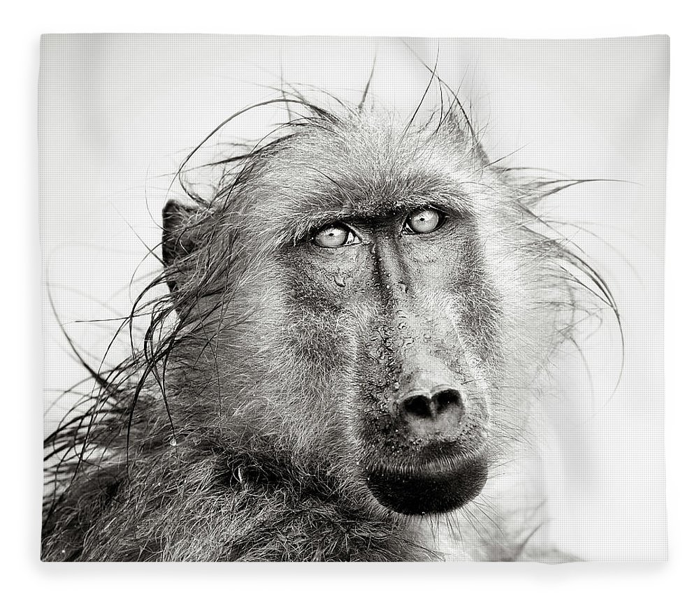 Baboon Fleece Blanket featuring the photograph Wet Baboon Portrait by Johan Swanepoel