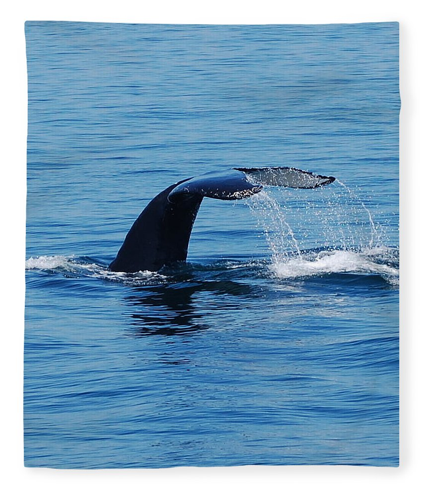 Whales Fleece Blanket featuring the photograph Whales Tale by Lisa Kane