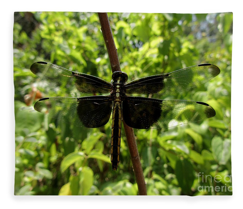 Insect Fleece Blanket featuring the photograph Widow Skimmer Dragonfly Female by Donna Brown