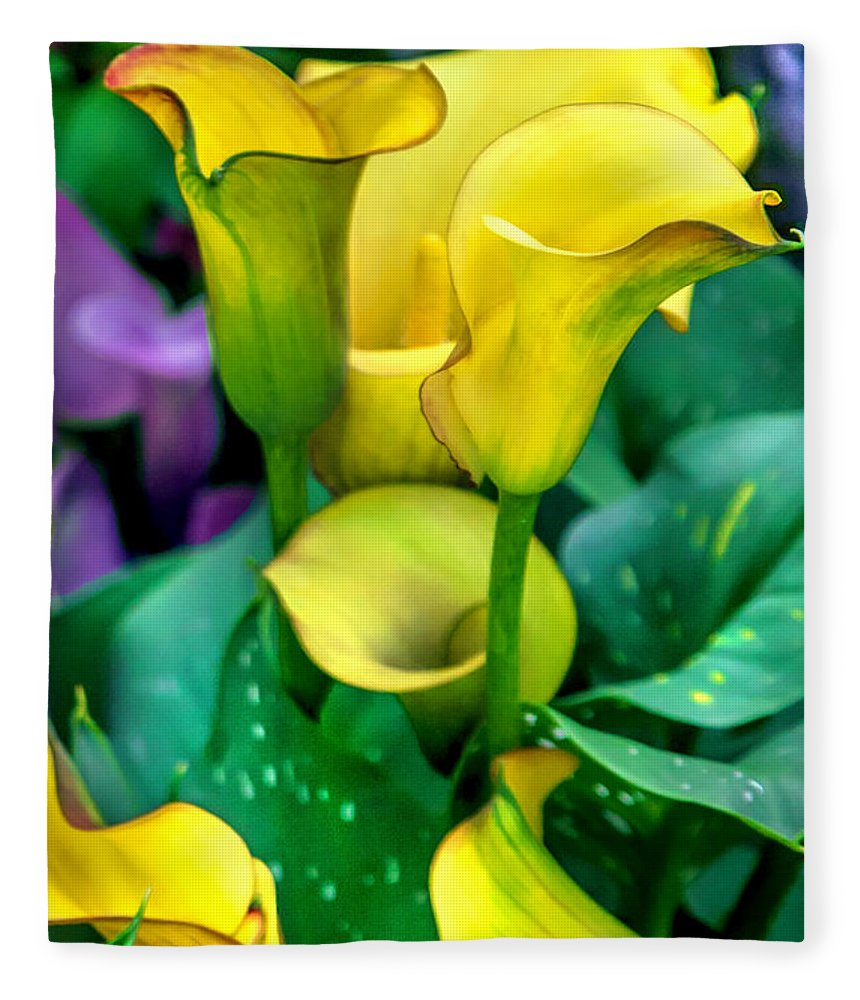 Spring Flowers Fleece Blanket featuring the photograph Yellow Calla Lilies by Az Jackson