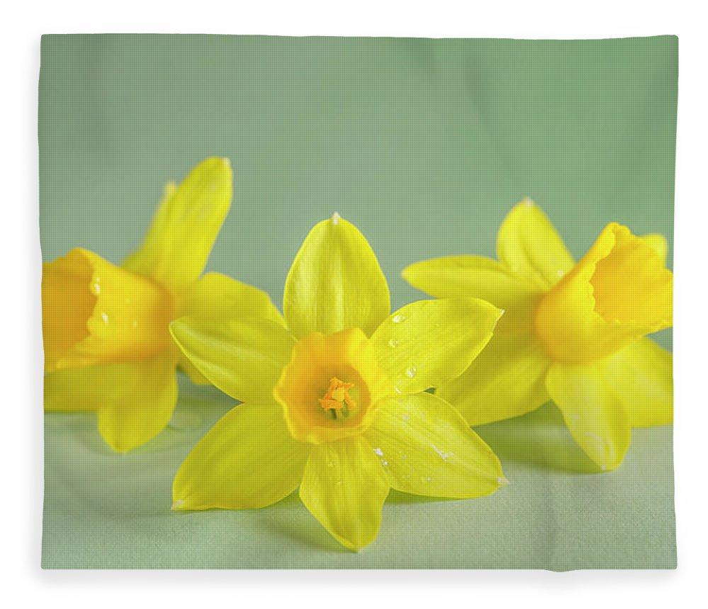 Yellow Mini Narcissus Fleece Blanket featuring the photograph Yellow Mini Narcissus On Green 2 by Iris Richardson