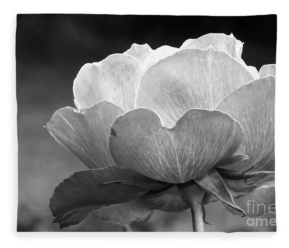 Rose Fleece Blanket featuring the photograph Your Are Beautiful by Christiane Schulze Art And Photography
