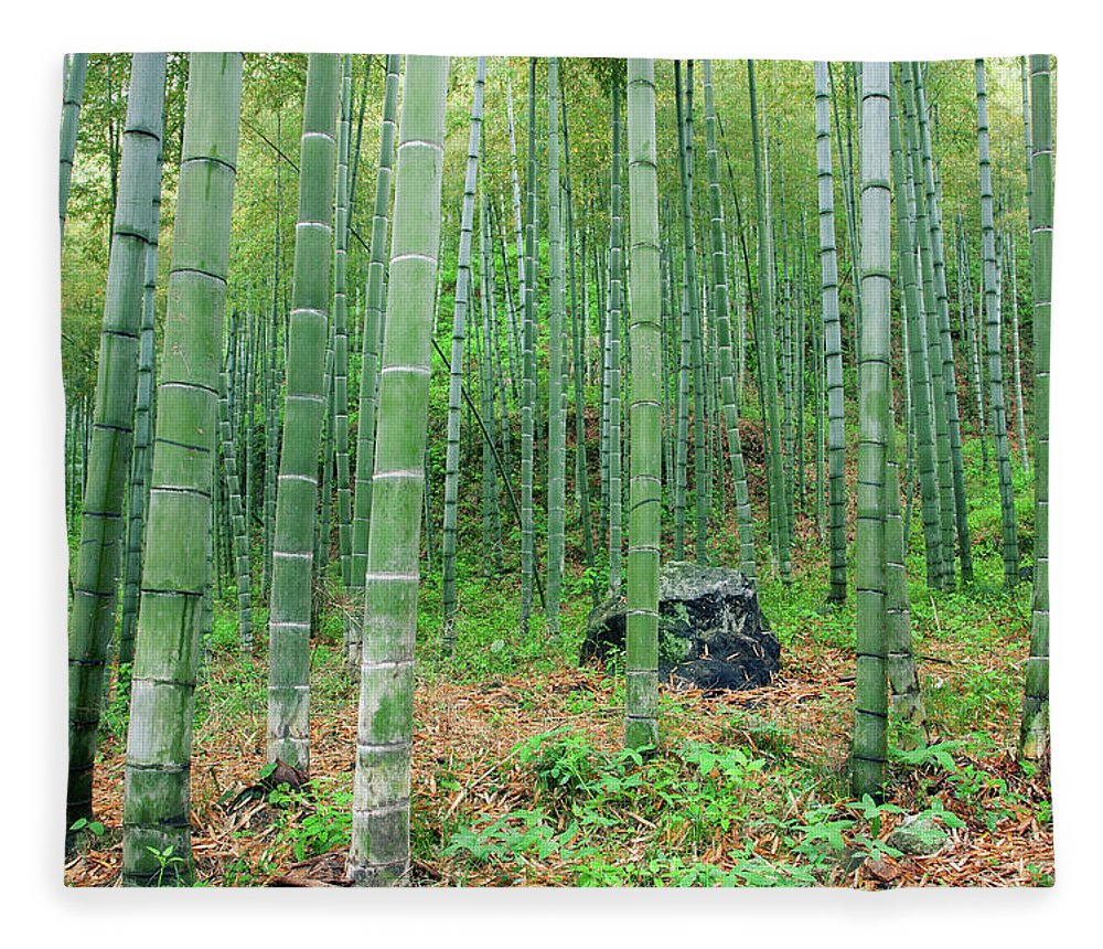 Chinese Culture Fleece Blanket featuring the photograph Bamboo Forest by Hudiemm