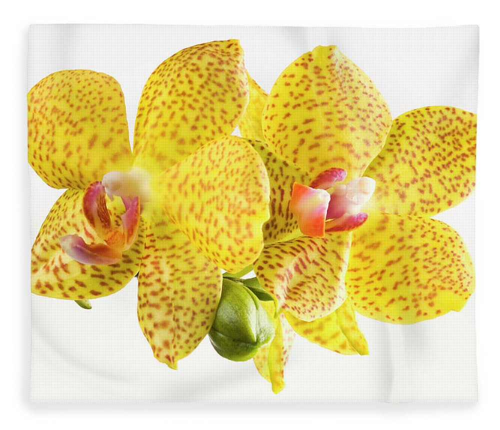 Thank You Fleece Blanket featuring the photograph Beautiful Yellow Orchid On White by Digihelion