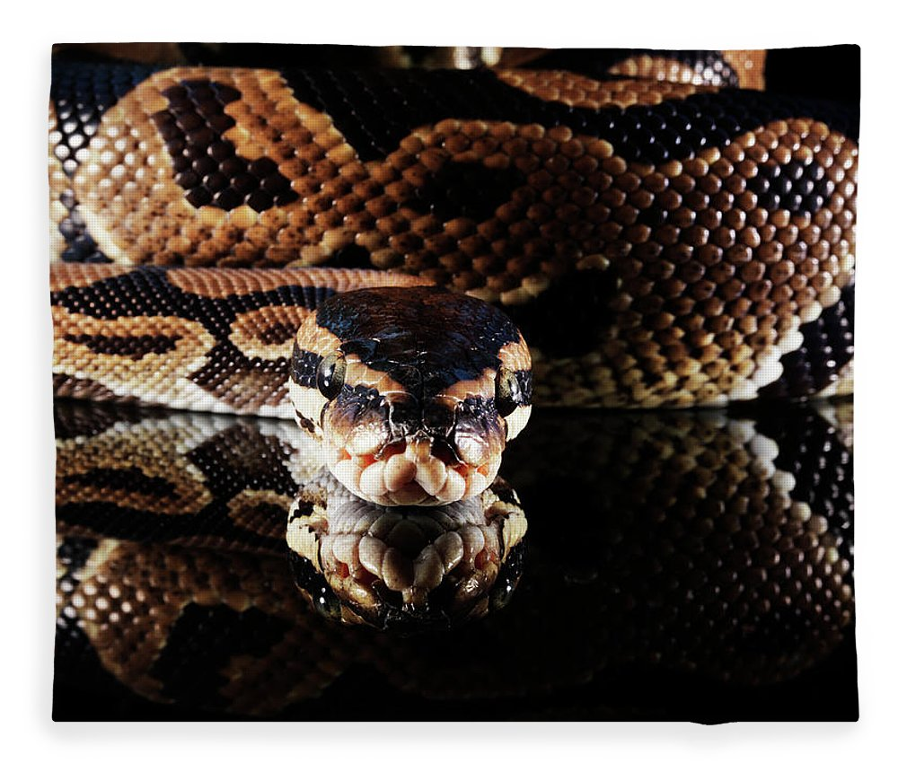 Copenhagen Fleece Blanket featuring the photograph Burmese Python by Henrik Sorensen