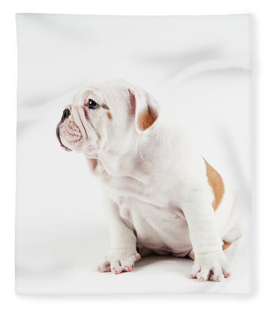 Pets Fleece Blanket featuring the photograph Cute Bulldog Puppy On White Background by Peter M. Fisher