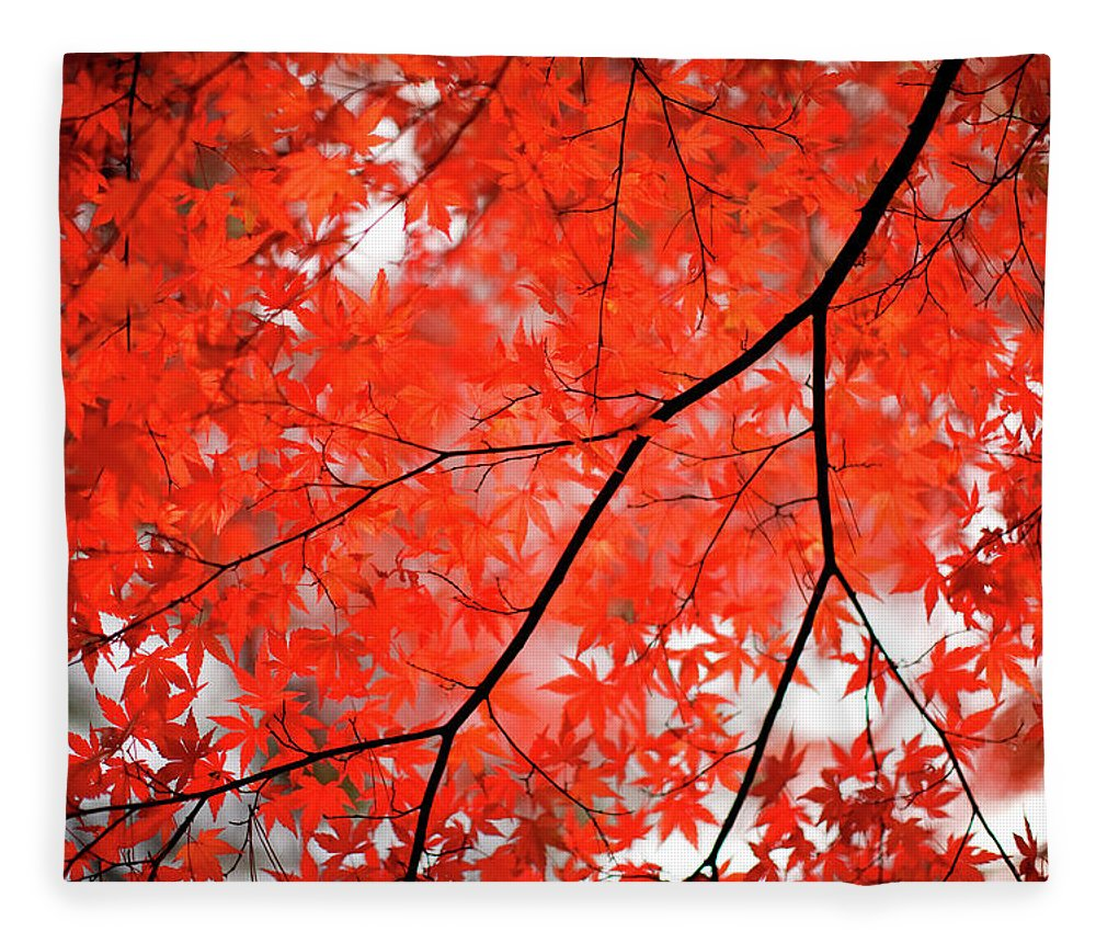 Tranquility Fleece Blanket featuring the photograph Fall Colors In Japan by Jdphotography
