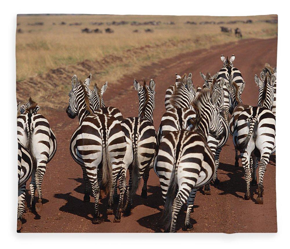 Plains Zebra Fleece Blanket featuring the photograph Grant Zebra by Imagenavi