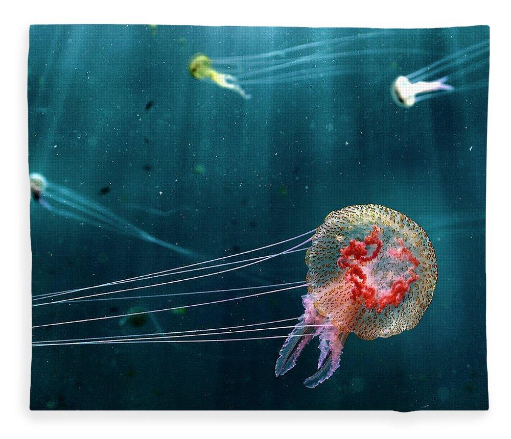 Underwater Fleece Blanket featuring the photograph Jellyfish Noctiluca Pelagia by © Francesco Pacienza