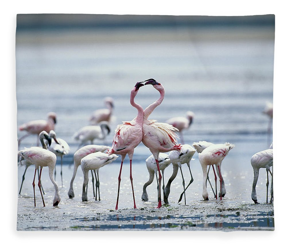 Tanzania Fleece Blanket featuring the photograph Lesser Flamingoes Phoeniconaias Minor by Paul Souders