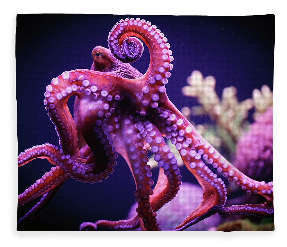 Underwater Fleece Blanket featuring the photograph Octopus by Reynold Mainse / Design Pics