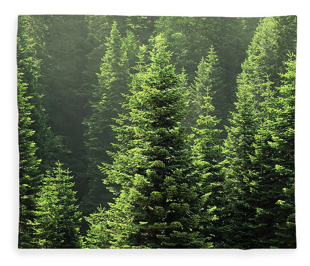 Scenics Fleece Blanket featuring the photograph Pine Tree by Petekarici