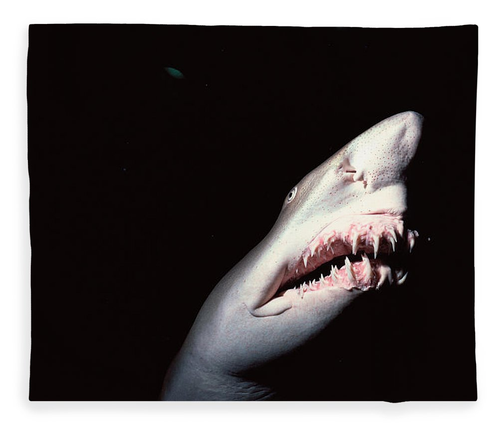 Underwater Fleece Blanket featuring the photograph Sand Tiger Shark by Jeff Rotman