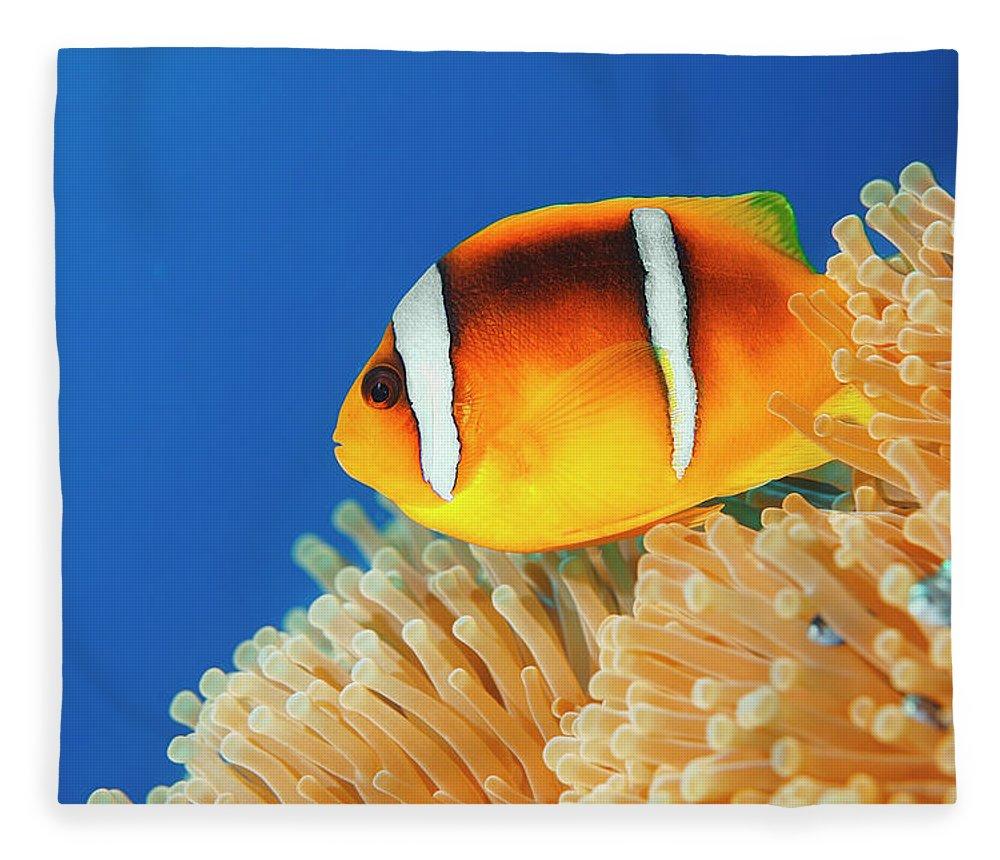 Underwater Fleece Blanket featuring the photograph Sea Life - Anemone Clownfish by Ultramarinfoto