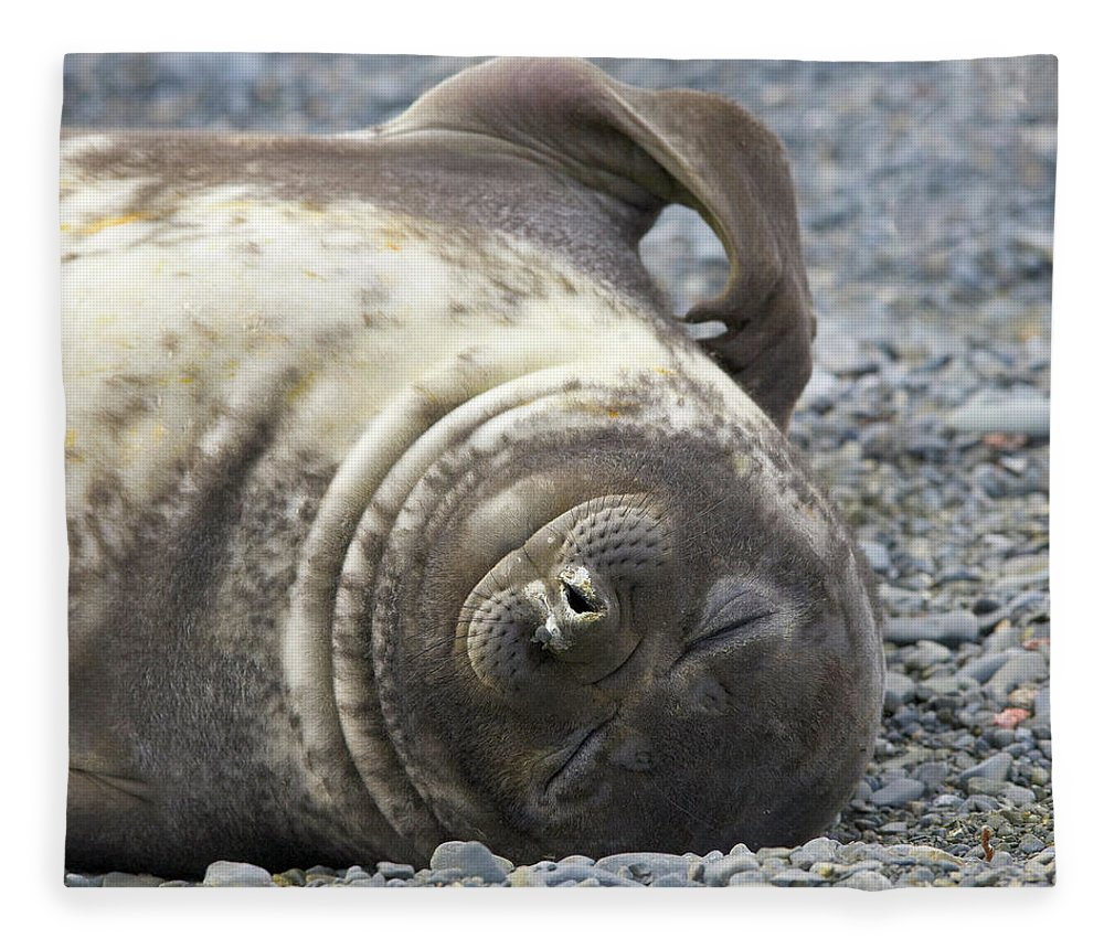 South Georgia Island Fleece Blanket featuring the photograph Southern Elephant Seal Weaner Pup by Eastcott Momatiuk