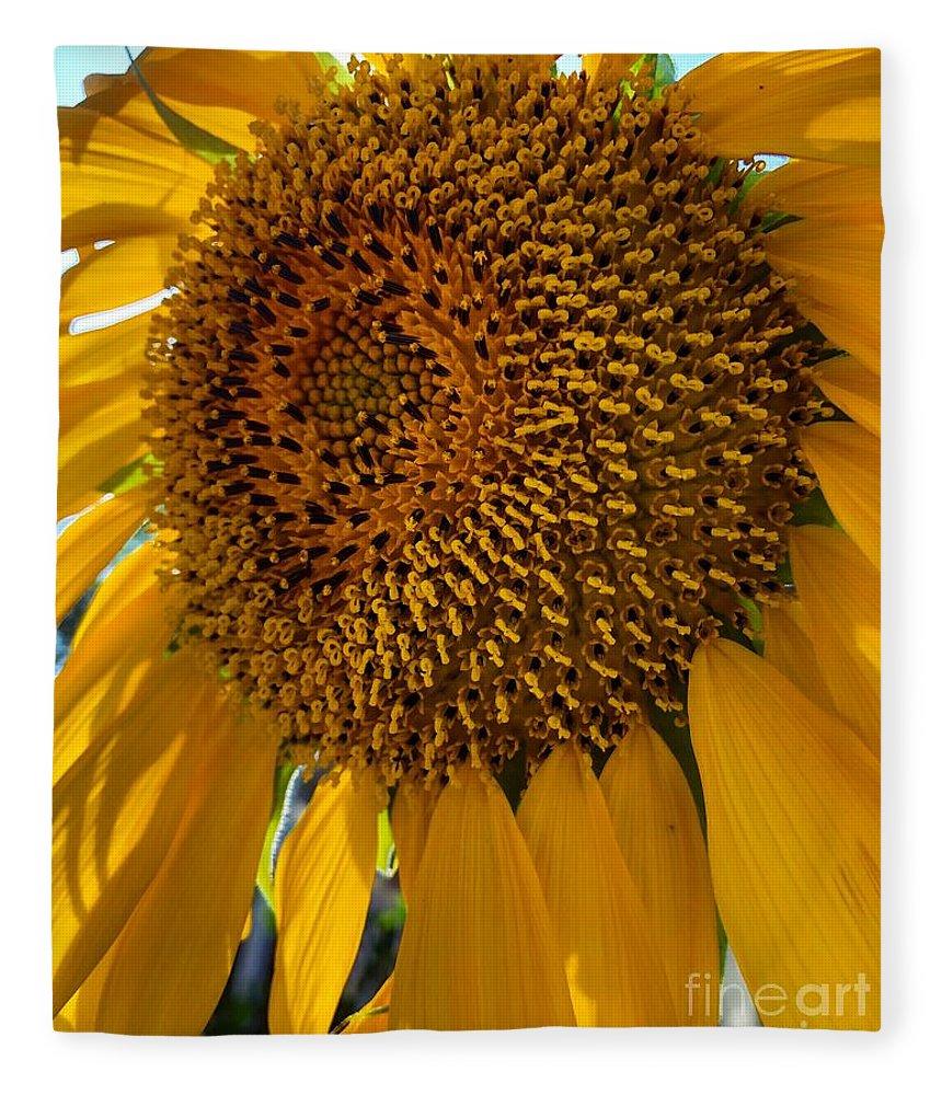 Sunflower Fleece Blanket featuring the photograph Sunflower In The Sun by Melissa OGara