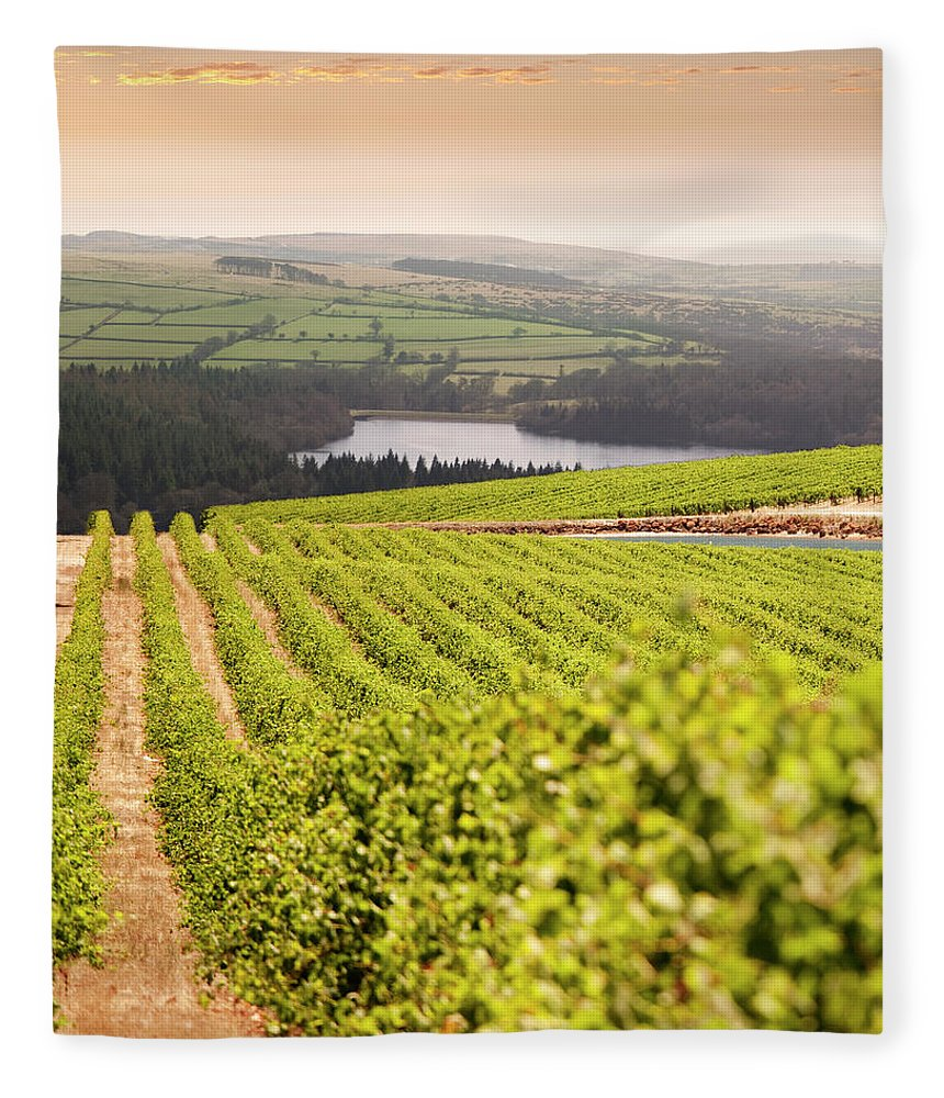Scenics Fleece Blanket featuring the photograph Vineyard At Sunset by Lockiecurrie