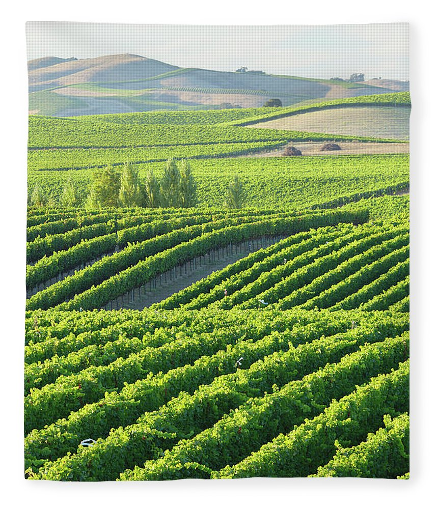 Scenics Fleece Blanket featuring the photograph Vineyard Landscape by S. Greg Panosian