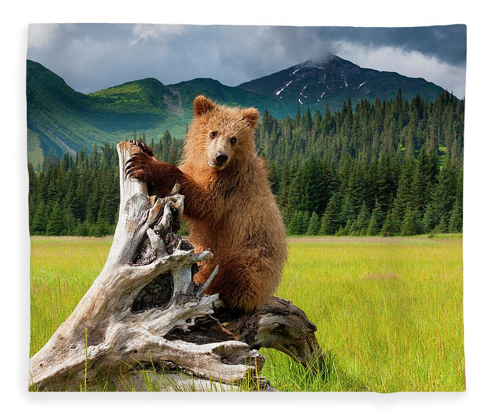 Brown Bear Fleece Blanket featuring the photograph Brown Bear, Lake Clark National Park by Mint Images/ Art Wolfe