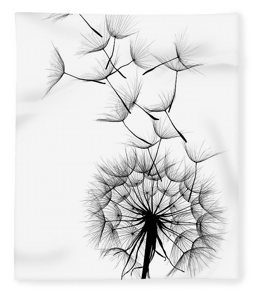 Wind Fleece Blanket featuring the photograph Dandelion by Sunnybeach
