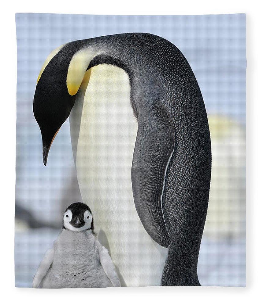 Emperor Penguin Fleece Blanket featuring the photograph Emperor Penguin by Raimund Linke
