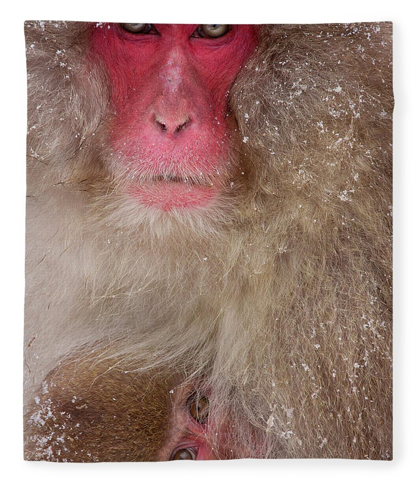 Vertebrate Fleece Blanket featuring the photograph Japanese Macaques, Japanese Alps by Mint Images/ Art Wolfe