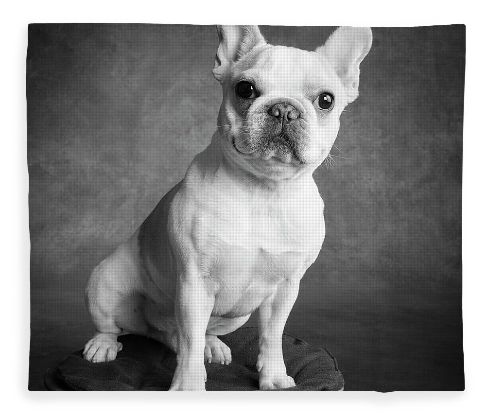 Photography Fleece Blanket featuring the photograph Portrait Of A French Bulldog by Panoramic Images