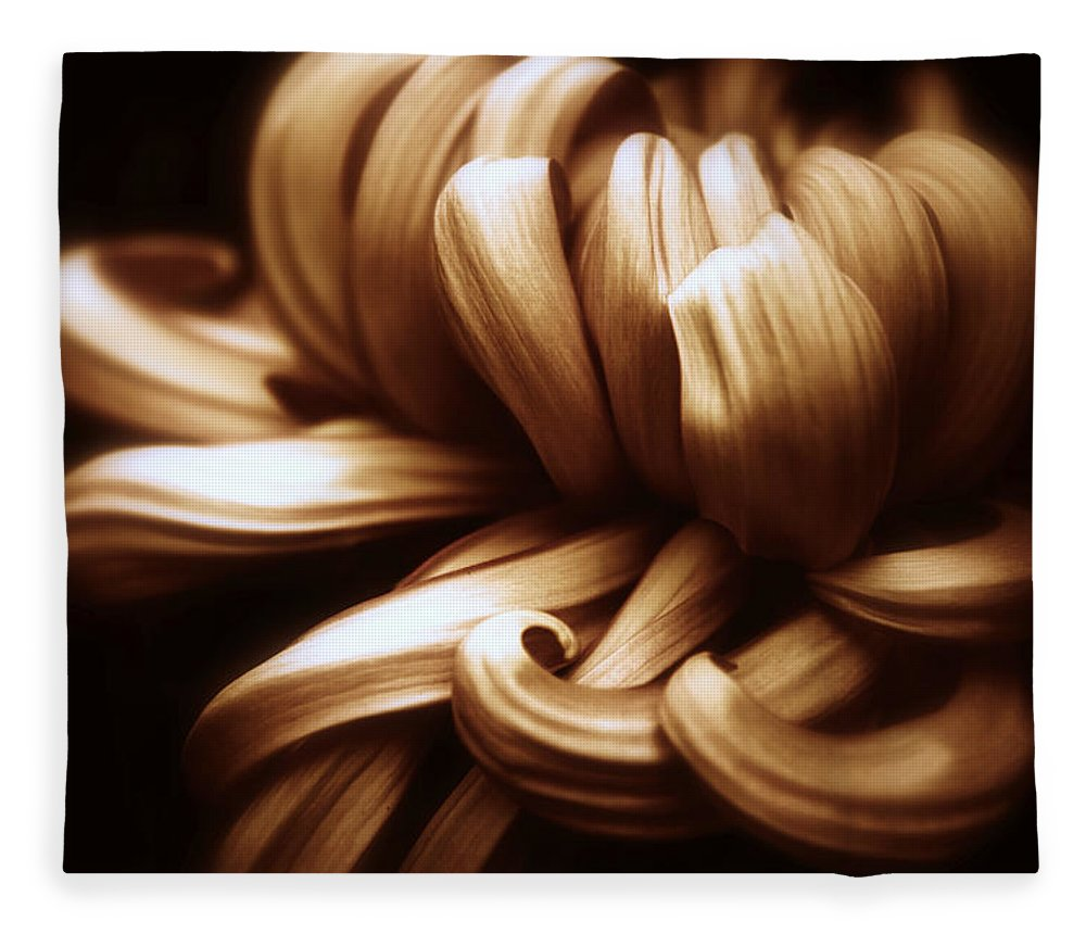 Chrysanthemum Fleece Blanket featuring the photograph Copper Chrysanthemum Curves by Jessica Jenney