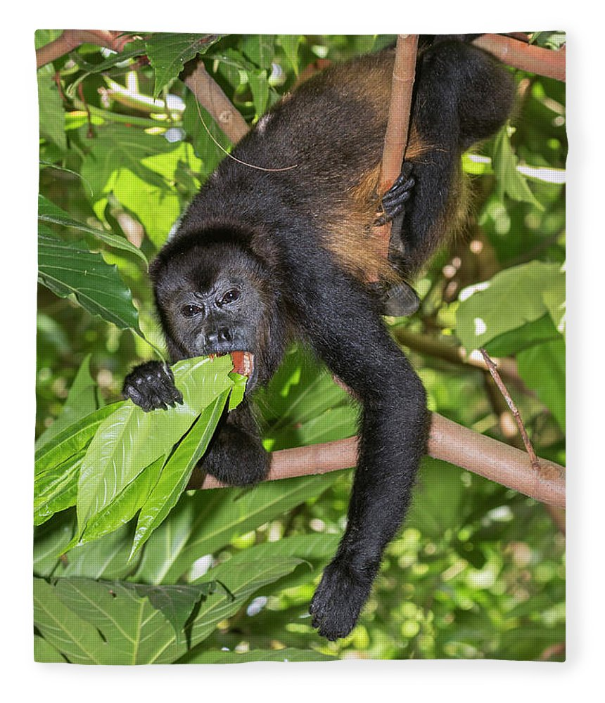 Alouatta Fleece Blanket featuring the photograph Mantled Howler Monkey Eating Leaves by Ivan Kuzmin